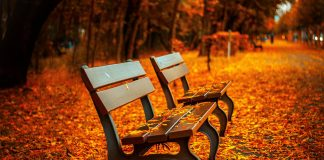 Some benches in an autumn park with many fallen leaves. It would be nice if someone cleaned them up, wouldn't it?
