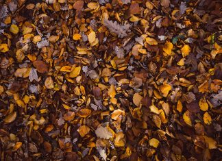 Fallen leaves on the ground.