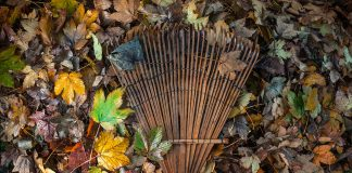 Some leaves with a rake on them.