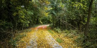 A road in a forest area, covered in fallen leaves.