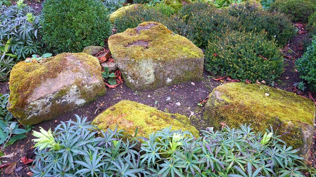 A rock garden with big rocks