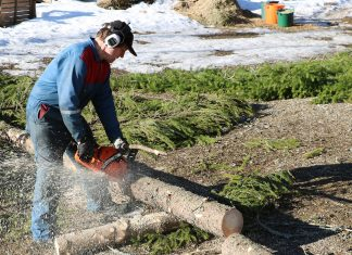 A homeowner cutting up a fallen tree with his gas powered chainsaw.