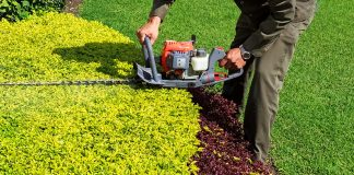 A gas powered hedge trimmer in action.