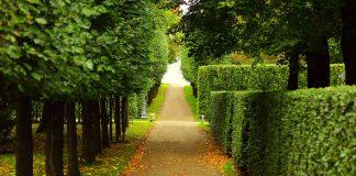 Some nicely trimmed hedges