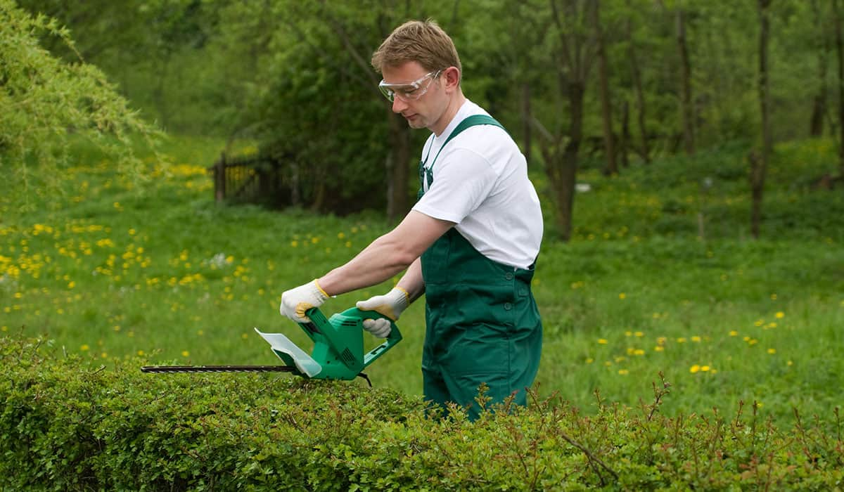 A man trimming hedge with an electric trimmer