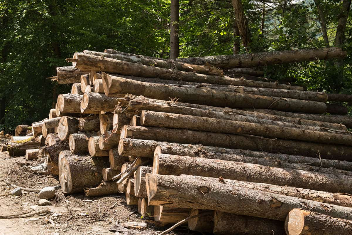 A bunch of large logs waiting to be processed.