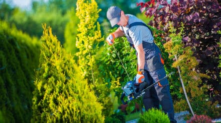 Gas Hedge Trimmer vs Electric – Which One is Better?
