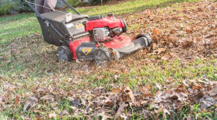 The 12 Best Lawn Mowers for Mulching